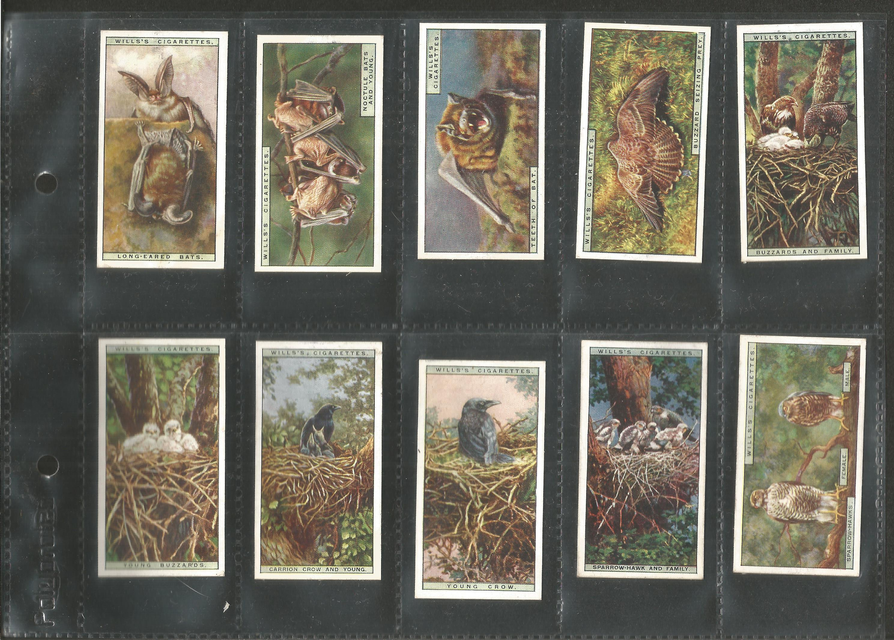 Cigarette card collection. 3 complete sets. Includes 1925 Flower culture in pots 50 cards, 1924 - Image 5 of 6