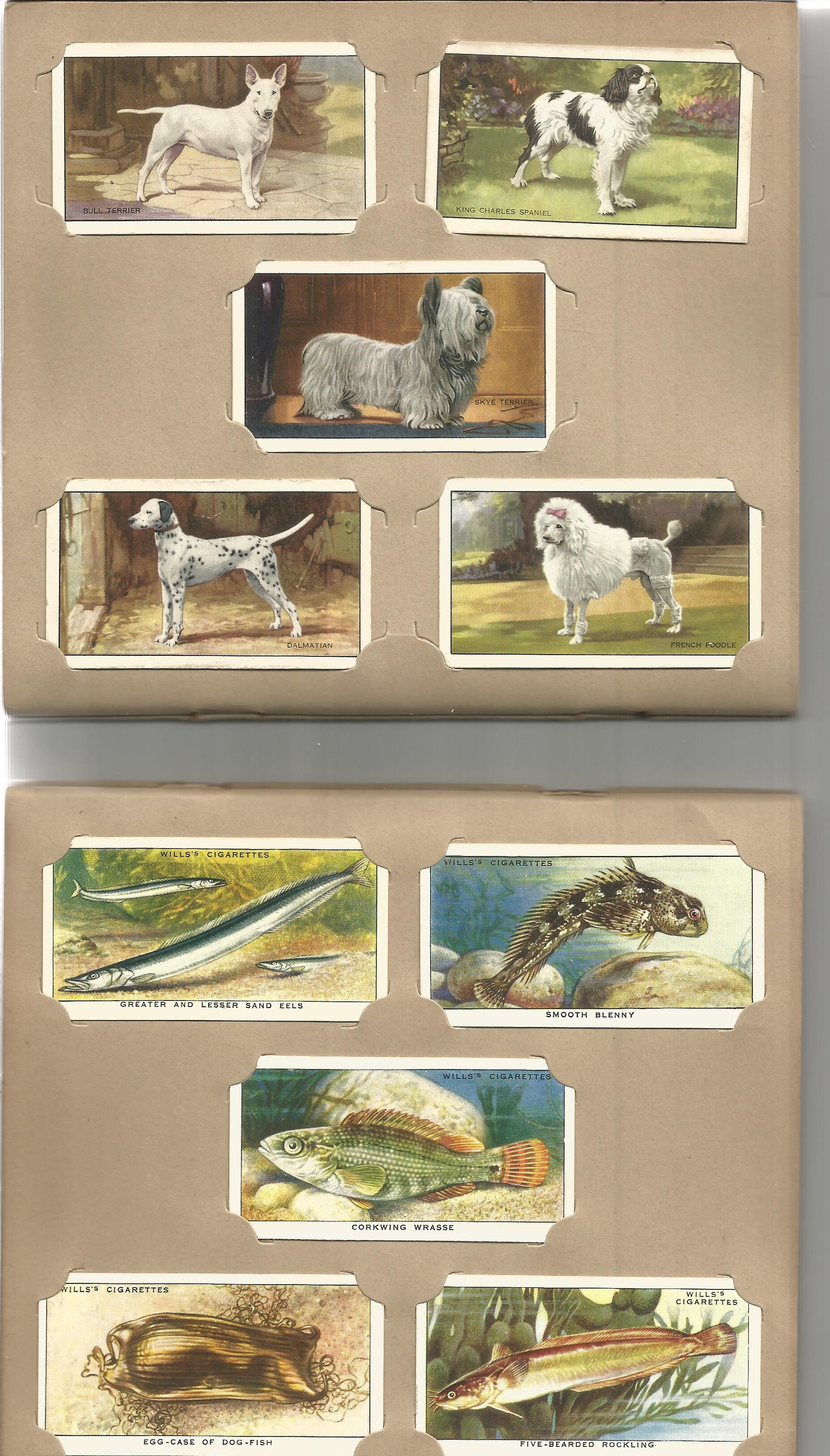 Cigarette card collection. 3 sets. 1938 dogs 48 cards, 1938 the seashore 50 cards and 1939 garden