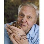 Sir David Attenborough, stunning 8x10 photo signed by David Attenborough. Good condition. All