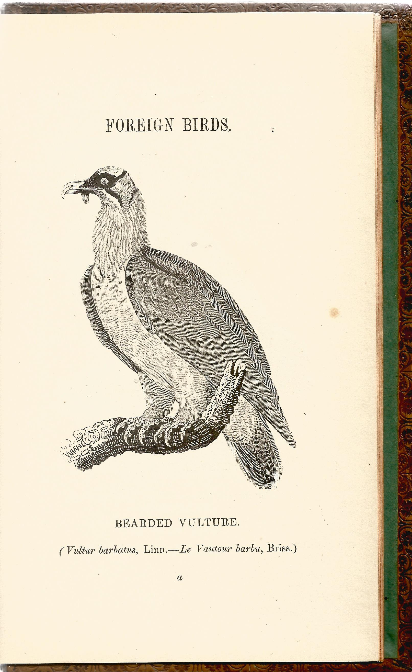 2 Hardback Books Bewick Birds A History of British Birds by Thomas Bewick 1847 Full Leather Bindings - Image 3 of 5