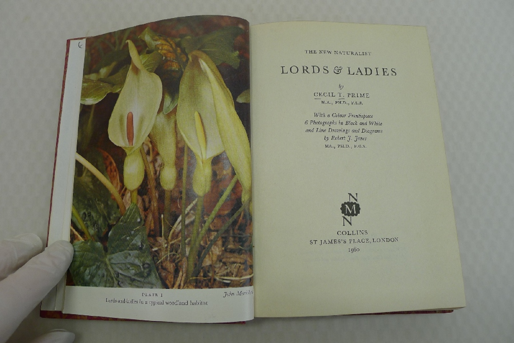 Lords and Ladies by Cecil T Prime published by Collins London 1960 First Edition A New Naturalist - Image 4 of 5