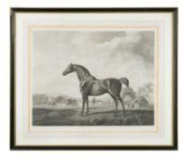 George Townley Stubbs (British, 1756-1815) after George Stubbs