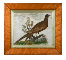 A Feathered cock pheasant on a branch, 19th century
