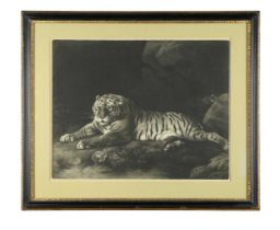 John Murphy after James Northcote, R. A., A Tyger, mezzotint, published by John & Jo'hah Boydell,
