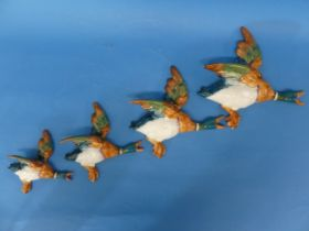 A set of four Beswick Flying Ducks,graduating in size, one broken and repaired,the largest: