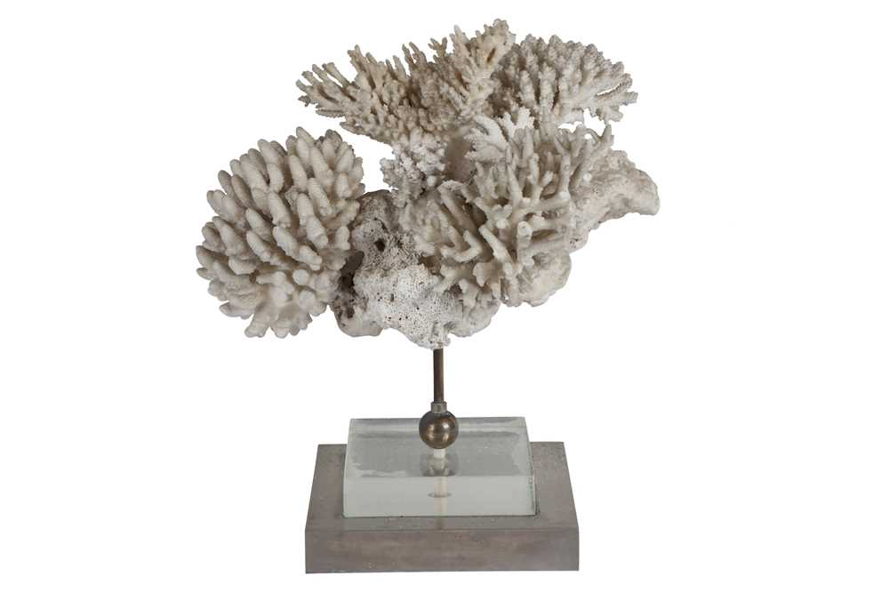 A CORAL SPECIMEN ON LUCITE BASE, CIRCA 1960s - Image 2 of 2
