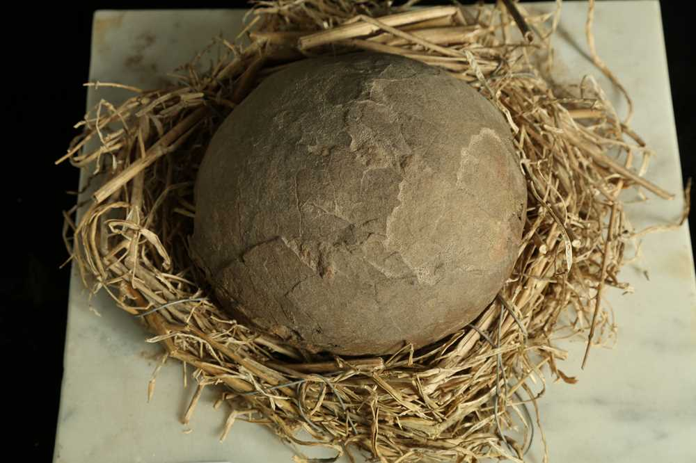 A SECTION OF FOSSILISED DINOSAUR (SAUROPOD) EGG, - Image 3 of 3