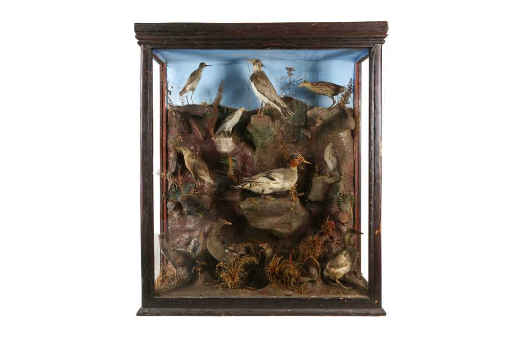 A LARGE VICTORIAN TAXIDERMY CASE OF ELEVEN WADERS