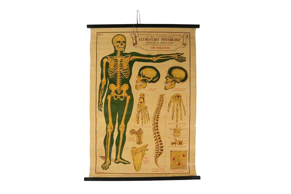 A SET OF SEVEN MID 20TH CENTURY ANATOMICAL POSTERS - Image 8 of 8