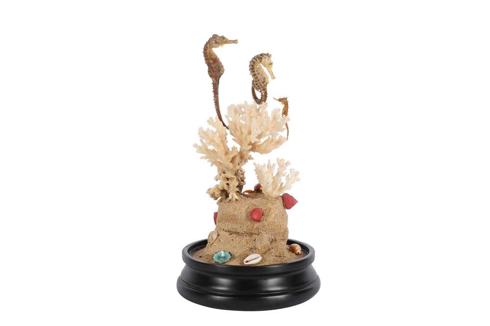 TAXIDERMY: ' SEA HORSE PARADISE' DOME DISPLAY - Image 3 of 3