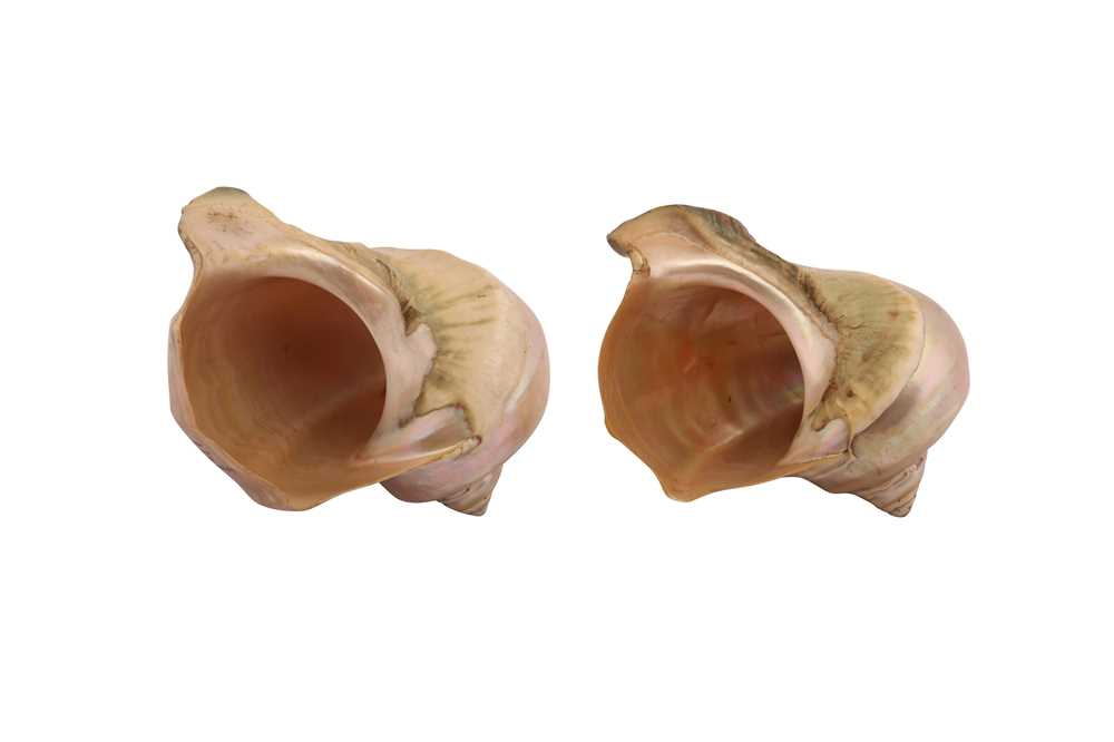 TWO 19TH CENTURY GREAT GREEN TURBAN SHELLS CARVED WITH SCENES OF WALES (TURBO MARMORATUS) - Image 2 of 3