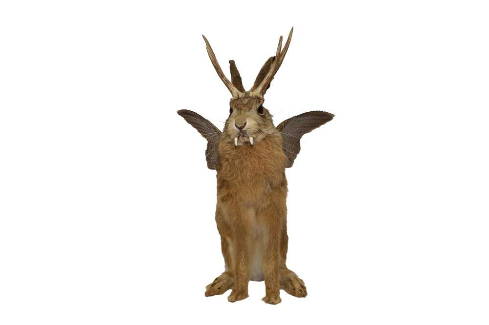 TAXIDERMY: 'WOLPERTINGER' - Image 3 of 5