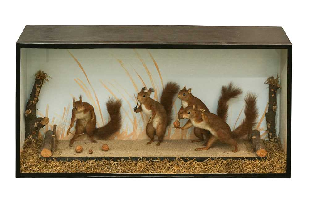 TAXIDERMY: A RARE DISPLAY OF RED SQUIRRELS PLAYING, IN THE MANNER OF WALTER POTTER