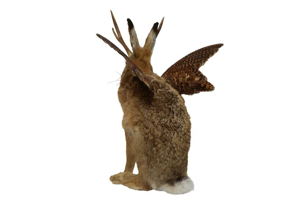 TAXIDERMY: 'WOLPERTINGER' - Image 4 of 5