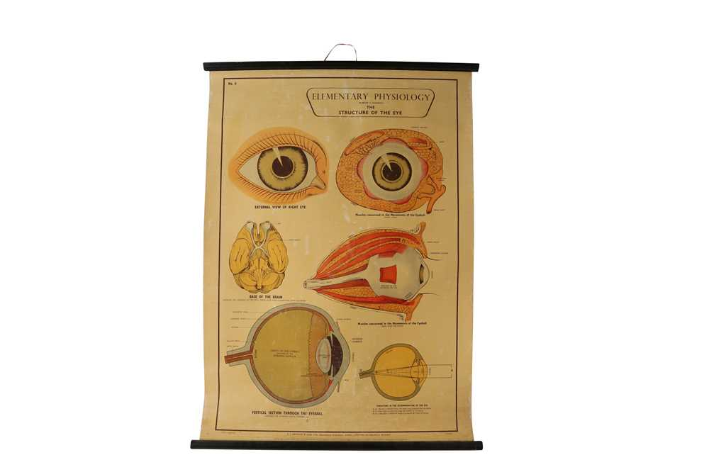 A SET OF SEVEN MID 20TH CENTURY ANATOMICAL POSTERS - Image 3 of 8