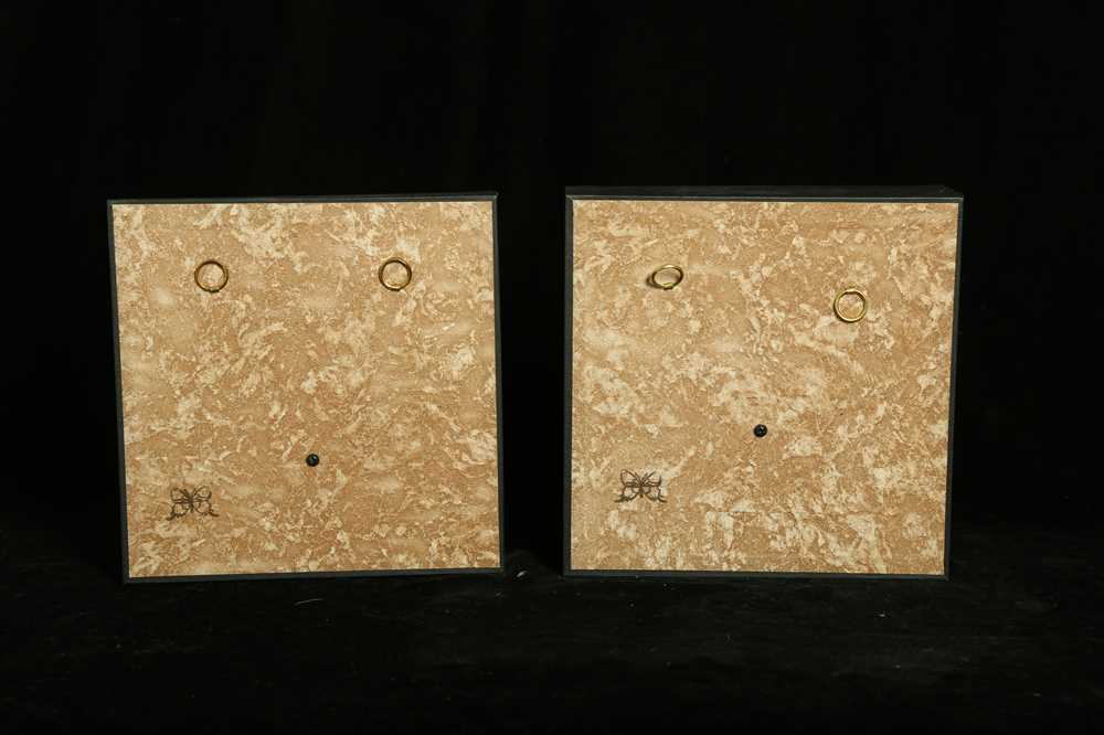 A SET OF FOUR TAXIDERMY CUT-THROAT FINCHES (AMADINA FASCIATA) IN CASES - Image 2 of 4