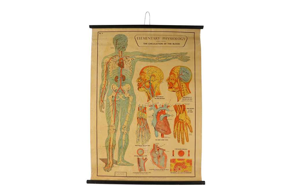 A SET OF SEVEN MID 20TH CENTURY ANATOMICAL POSTERS - Image 7 of 8
