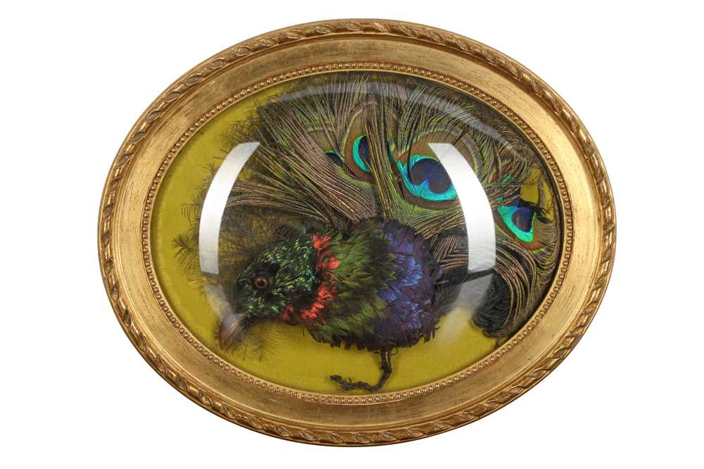 TAXIDERMY: AN EXOTIC BIRD HEAD AND FEATHERS IN WALL DOME