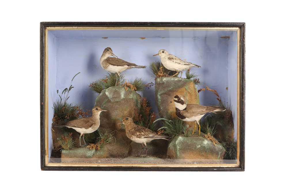 A TAXIDERMY VICTORIAN MIXED CASE OF FIVE WADING BIRDS