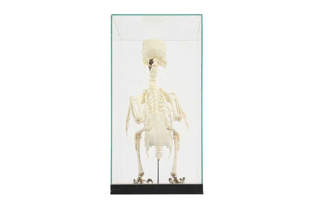 THE SKELETON OF AN AMAZON PARROT IN A GLASS CASE - Image 2 of 5