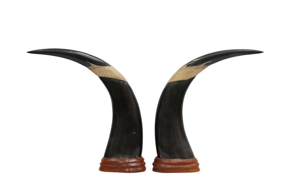 TAXIDERMY/ NATURAL HISTORY: A PAIR OF POLISHED AND CARVED WATER BUFFALO HORNS - Image 2 of 2