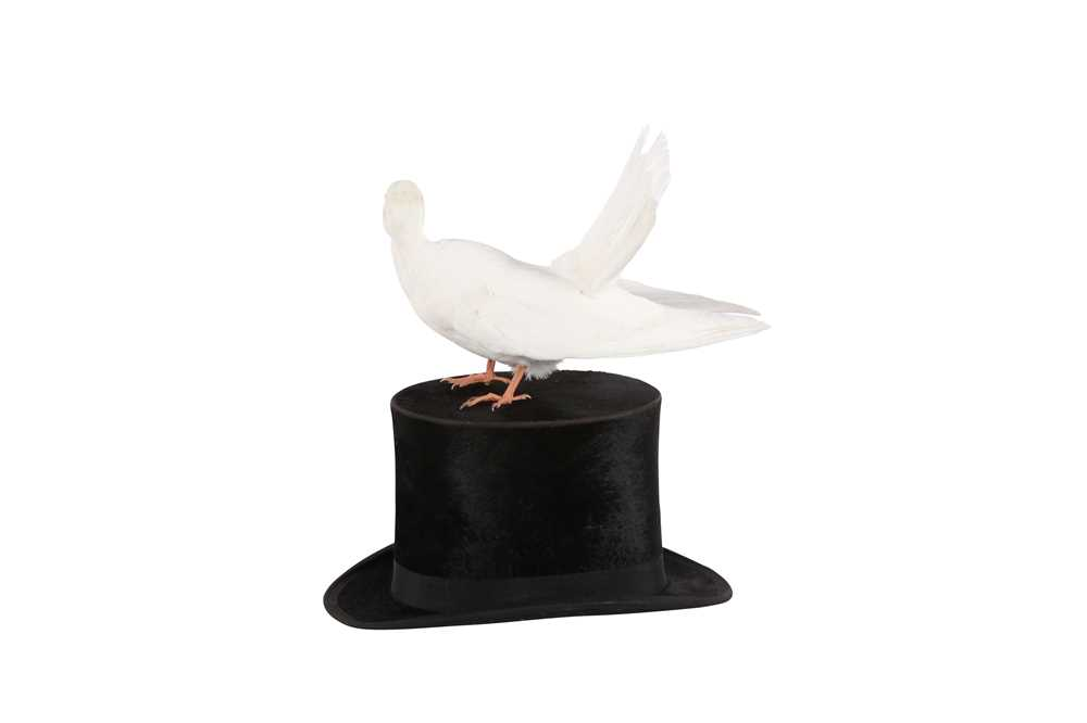 TAXIDERMY:'A MAGICIAN'S ASSISTANT' WHITE DOVE ON TOP HAT - Image 2 of 2