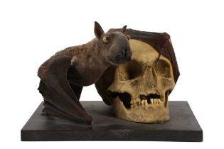 A TAXIDERMY FRUIT BAT MOUNTED BESIDE A MODEL OF A HUMAN SKULL