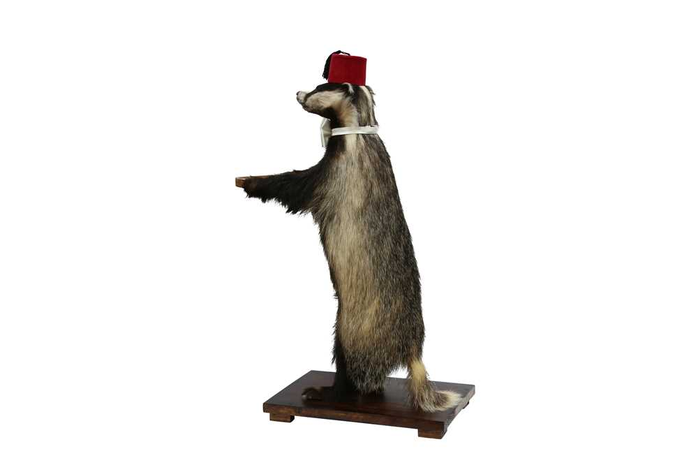 TAXIDERMY: A BADGER (MELES MELES) WAITER WEARING A FEZ AND A BOW TIE - Image 2 of 3