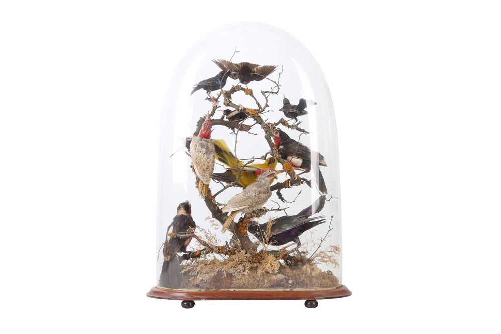 TAXIDERMY: A VICTORIAN DOME DISPLAY OF EXOTIC AFRICAN BIRDS, LATE 19TH CENTURY - Image 2 of 2