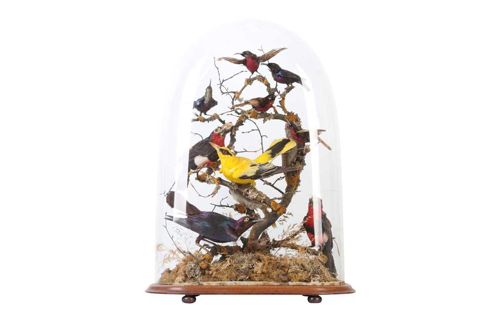 TAXIDERMY: A VICTORIAN DOME DISPLAY OF EXOTIC AFRICAN BIRDS, LATE 19TH CENTURY