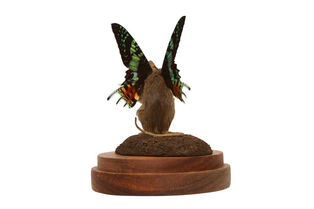 TAXIDERMY: A FLUTTER-MOUSE IN GLASS DOME - Image 5 of 5