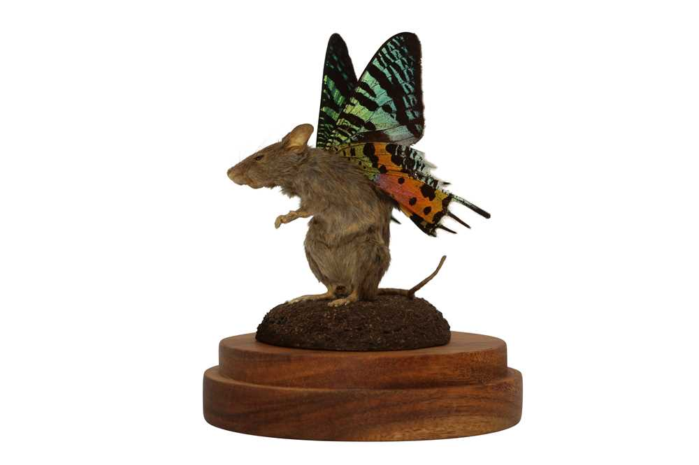 TAXIDERMY: A FLUTTER-MOUSE IN GLASS DOME