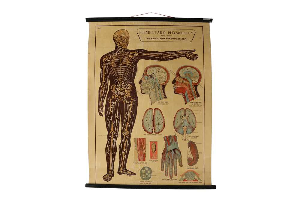 A SET OF SEVEN MID 20TH CENTURY ANATOMICAL POSTERS - Image 5 of 8