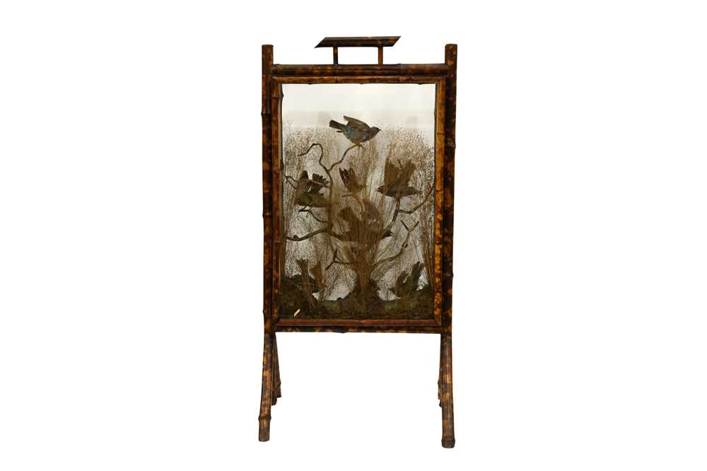 A BAMBOO FIRESCREEN DISPLAY OF EXOTIC BIRDS AND BEETLES, IN THE MANNER OF ROWLAND WARD - Image 2 of 2