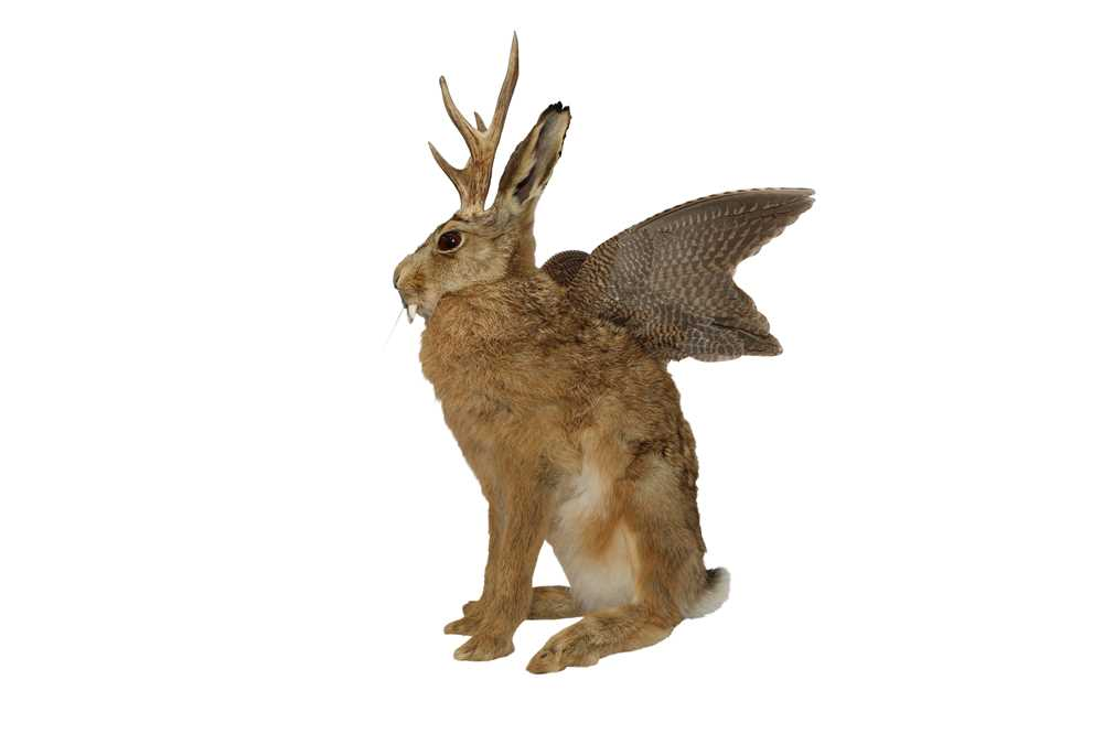 TAXIDERMY: 'WOLPERTINGER' - Image 2 of 5
