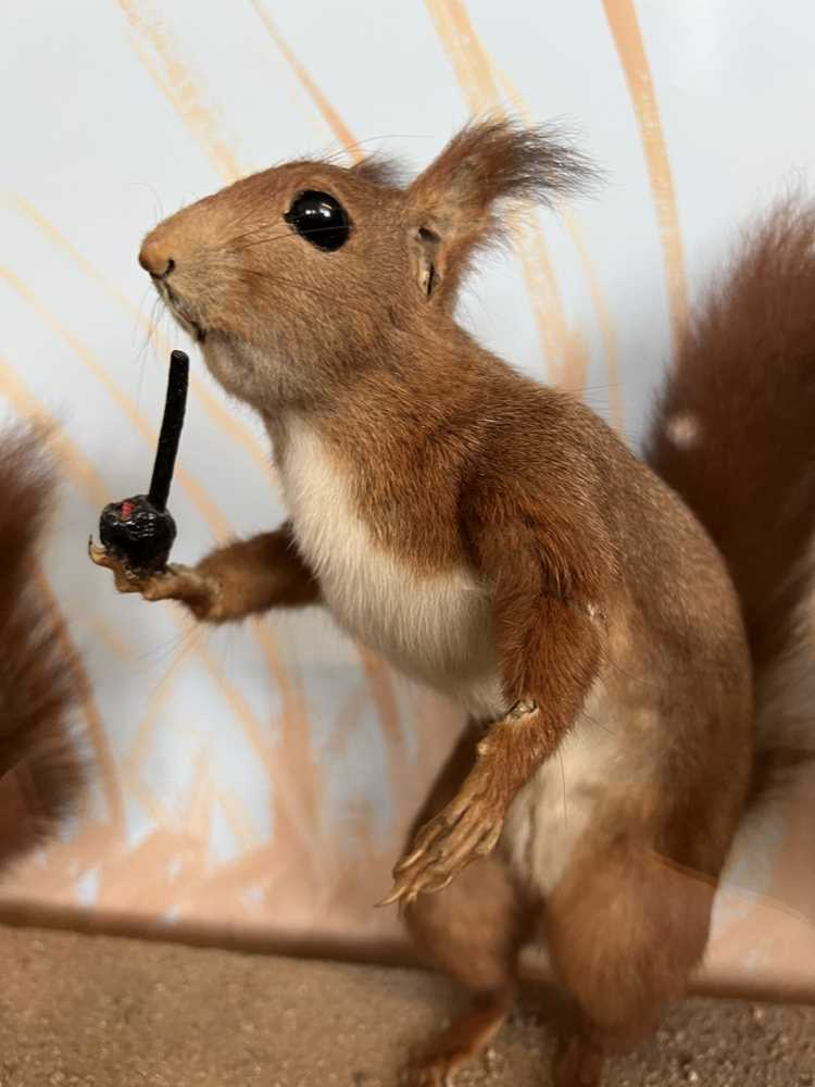 TAXIDERMY: A RARE DISPLAY OF RED SQUIRRELS PLAYING, IN THE MANNER OF WALTER POTTER - Image 5 of 5