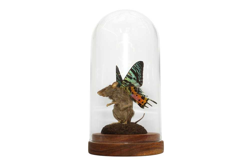 TAXIDERMY: A FLUTTER-MOUSE IN GLASS DOME - Image 4 of 5