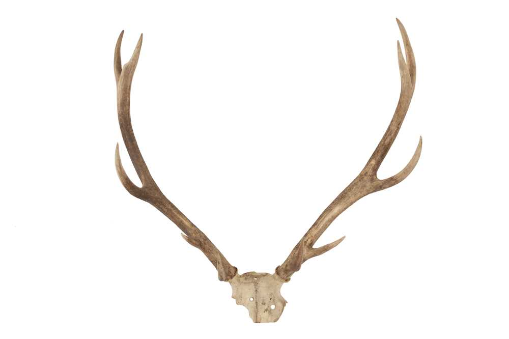 THREE SETS OF DEER ANTLERS INCLUDING ONE DATED 1904 - Image 4 of 5