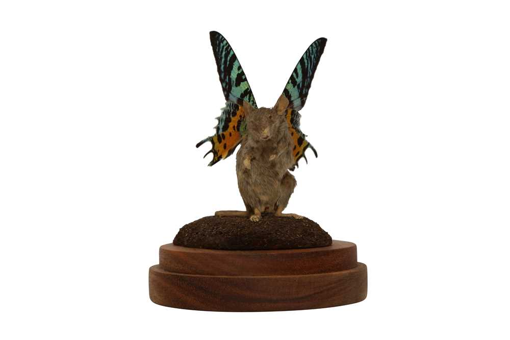 TAXIDERMY: A FLUTTER-MOUSE IN GLASS DOME - Image 3 of 5