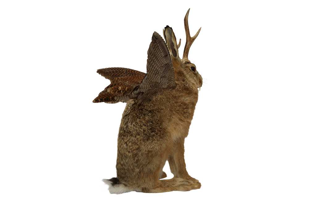 TAXIDERMY: 'WOLPERTINGER' - Image 5 of 5