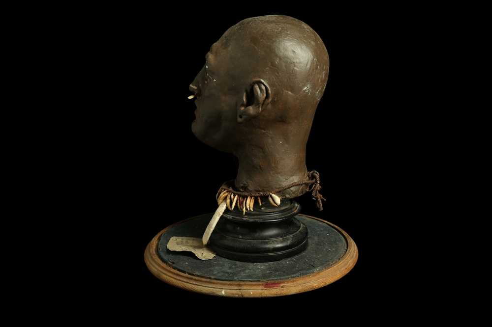 A MODEL OF A TRIBAL ELDERS' HEAD A NEW GUINEA TRIBAL HEAD UNDER A LARGE 19TH CENTURY GLASS DOME - Image 6 of 13