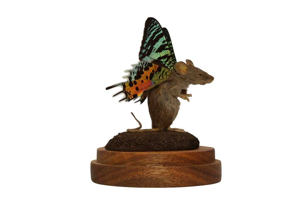 TAXIDERMY: A FLUTTER-MOUSE IN GLASS DOME - Image 2 of 5