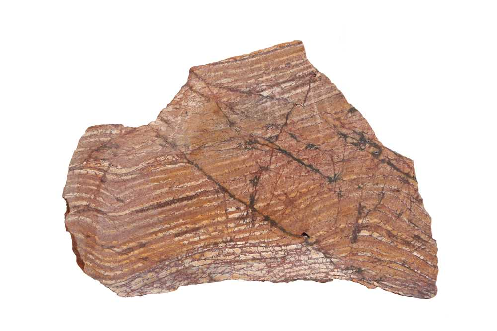 A 3.4 BILLION YEARS OLD STROMATOLITE, ONE OF THE WORLD'S MOST ANCIENT FOSSILS