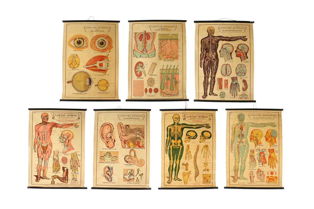 A SET OF SEVEN MID 20TH CENTURY ANATOMICAL POSTERS