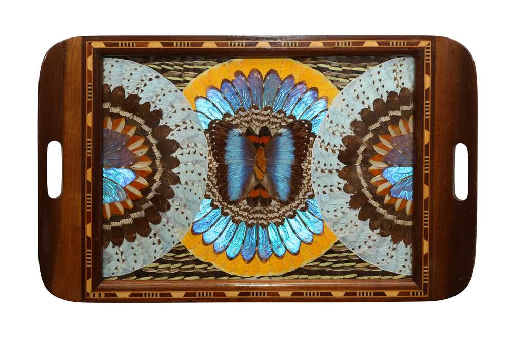 TAXIDERMY/ ENTOMOLOGY: BUTTERFLY WINGS TRAY, EARLY-MID 20TH CENTURY