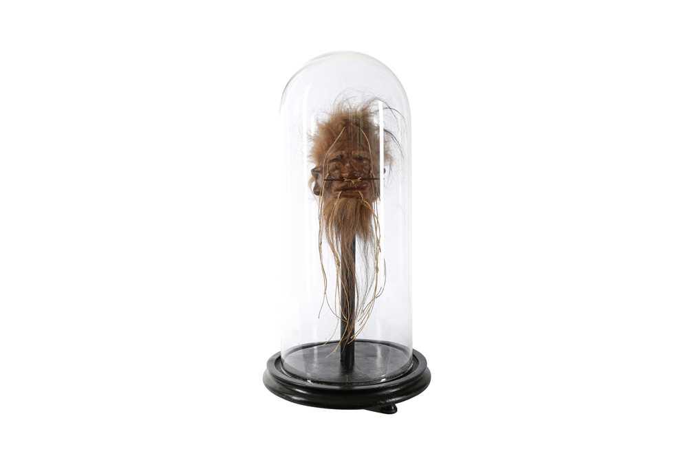 A FAUX SHRUNKEN HEAD (LLAMA SKIN) UNDER A GLASS DOME