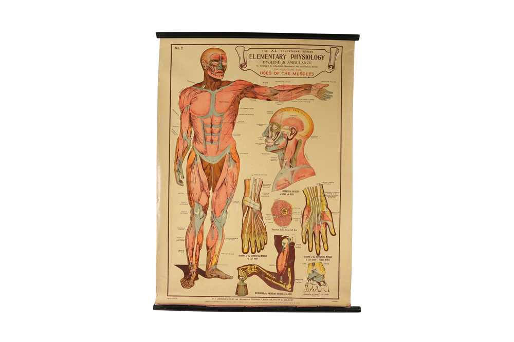 A SET OF SEVEN MID 20TH CENTURY ANATOMICAL POSTERS - Image 2 of 8
