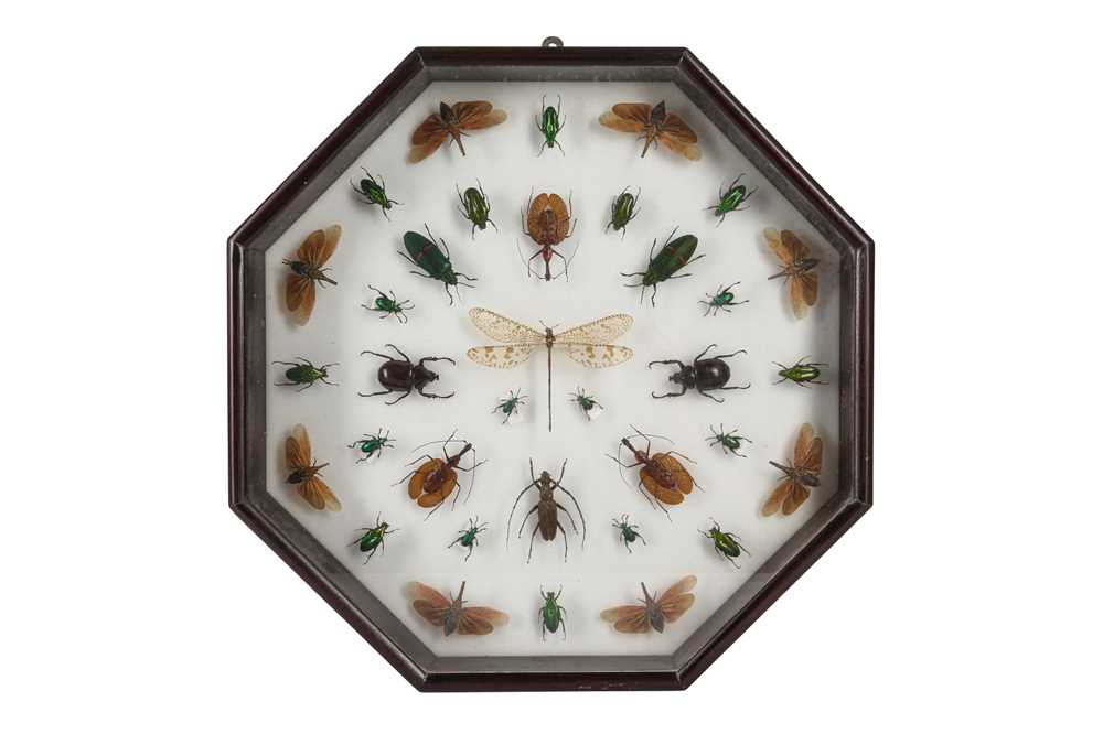 A CASED DISPLAY OF BEETLES AND A DRAGON FLY