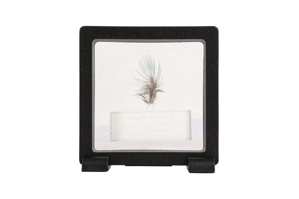 A FEATHER OF THE EXTINCT PARADISE PARROT - Image 2 of 2
