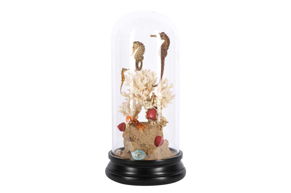 TAXIDERMY: ' SEA HORSE PARADISE' DOME DISPLAY - Image 2 of 3
